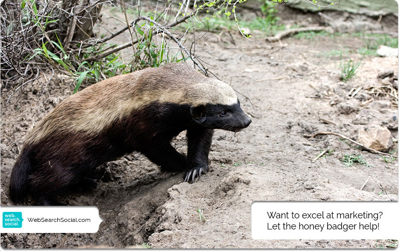 "Content Marketing Lessons From the Honey Badger: Bee Stings and Snake Venom? ""He Doesn't Care"""